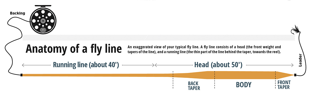 Anatomy of a fly line