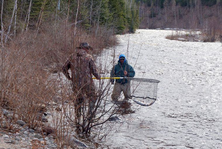 Men in a river netting a fish