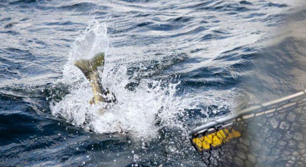 fish tail splashing out of water