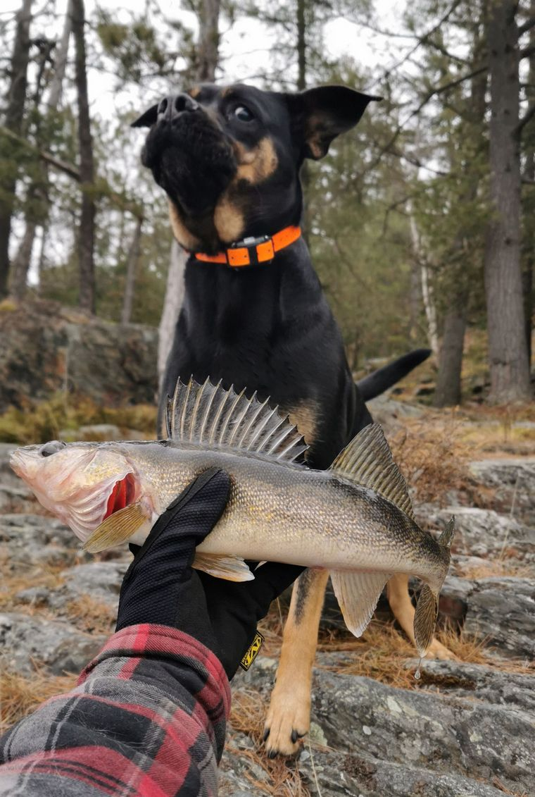 Congratulations to Photo Friday winner Nathan Phillips of Nairn Centre who submitted this photo of his three-year-old rescue dog Zoey, who loves fishing, but isn't really that fond of fish. Can you tell?