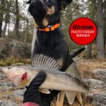 Photo Friday winner Nathan Phillips of Nairn Centre submitted this photo of his three-year-old rescue dog, Zoey, who loves fishing, but isn't really that fond of fish. Can you tell?