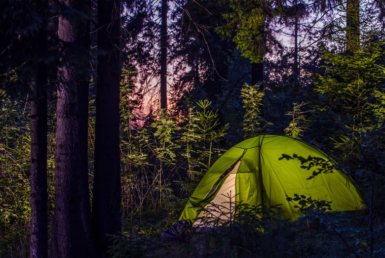 Camping in a Forest. Late Evening on a Camp Site. Green Illuminated Tent Between Spruce Trees.