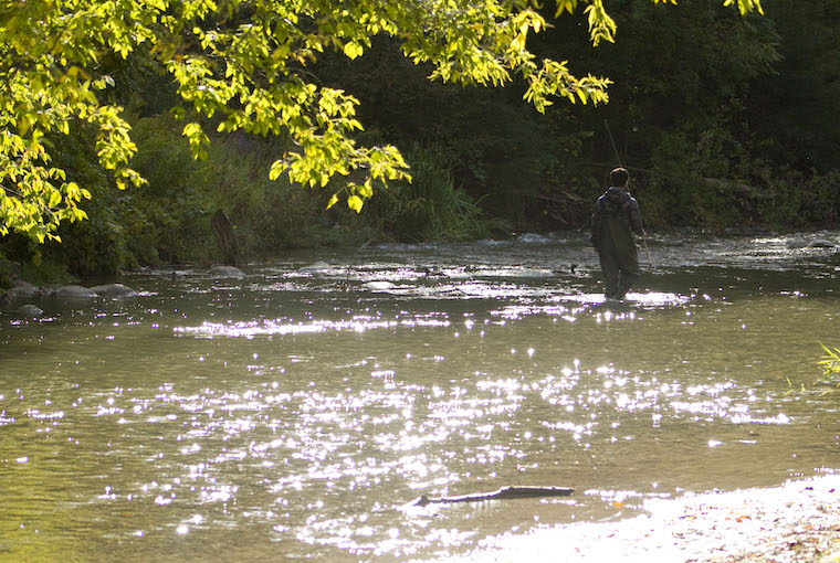 a man walks through a sun-speckled creek in waders, rod-in-hand