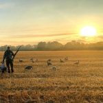 Dale Harrison of Cambridge began his goose hunt near Freelton with this arrangement of decoys on a spectacular September morning.