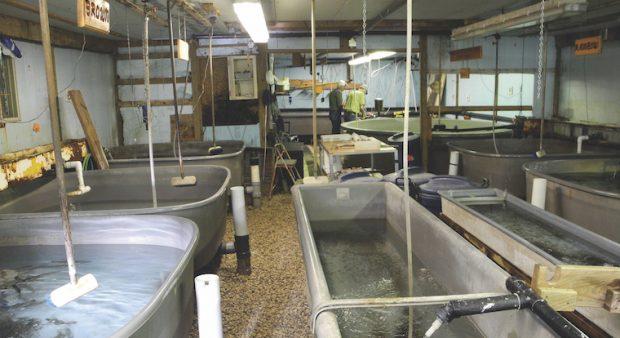 hatchery tubs organized by fish