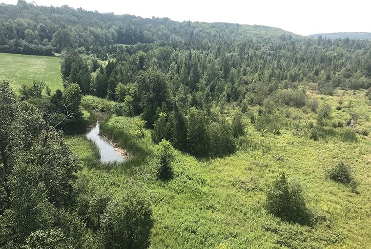 an overview of wetlands